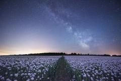 Milky Way over Dorset Poppy Field
